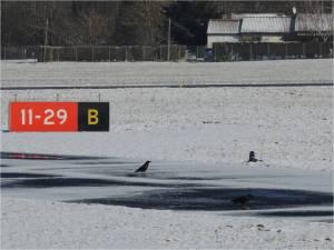 Les corbeaux au point d'arret bravo