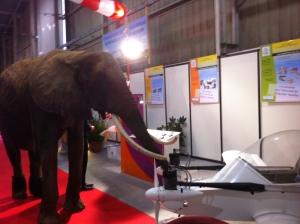 Original - un éléphant à coté du cricri