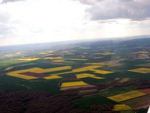 Les champs de colza en fleurs